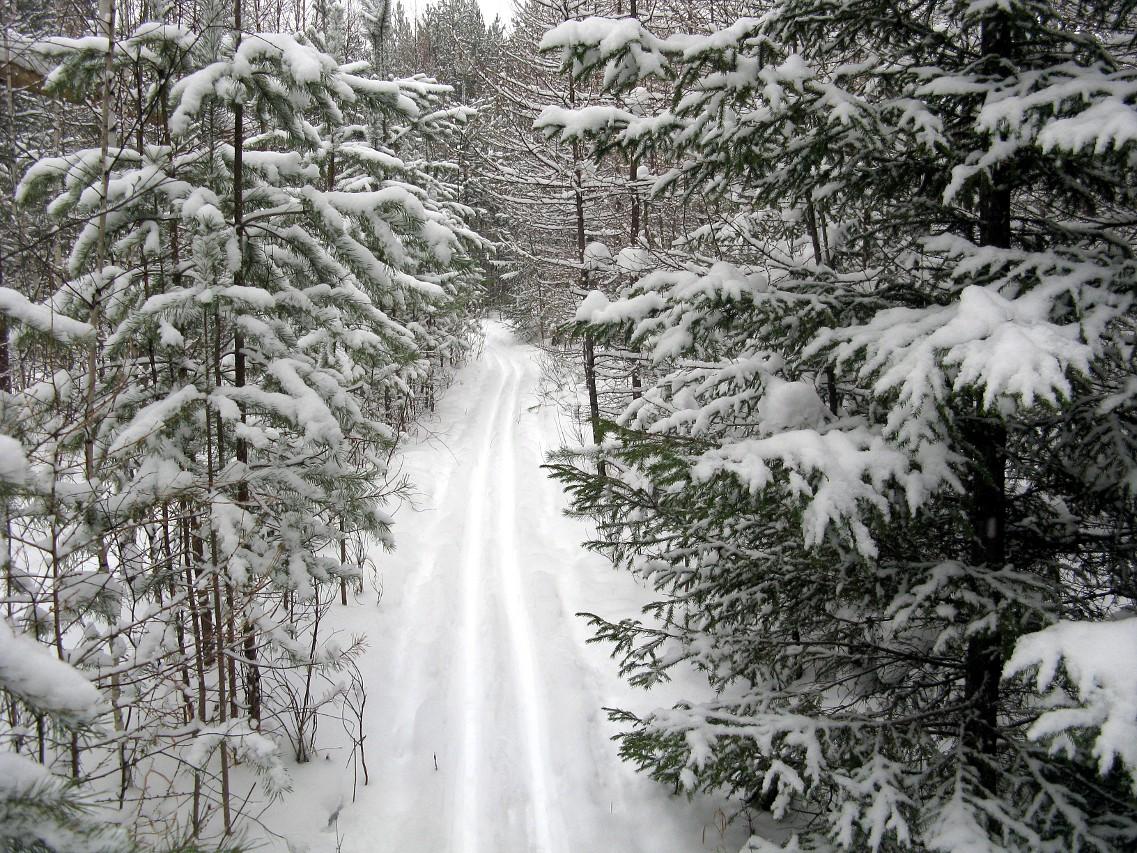 Уральский лес после снегопада