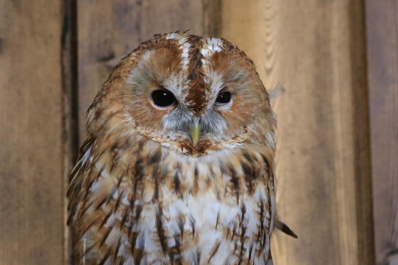 FiloSoviya - Museum of Owls, Zelenogradsk